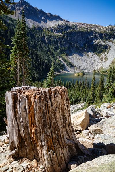 Rainy Pass, Maple Pass - Old stump along the trail near Lake Ann
