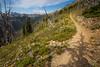 Harts Pass, Tatie Peak - Trail on open hillside with flowers
