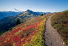 Whatcom, Yellow Aster Butte - Mt. Baker and colorful meadow with trail sweeping out of the frame