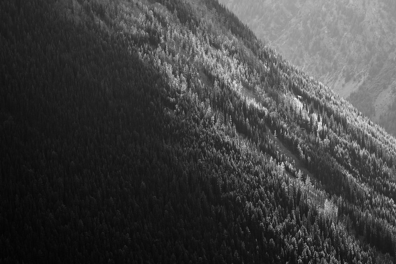 Harts Pass, Windy Pass - Light illuminating trees in canyon, black and white