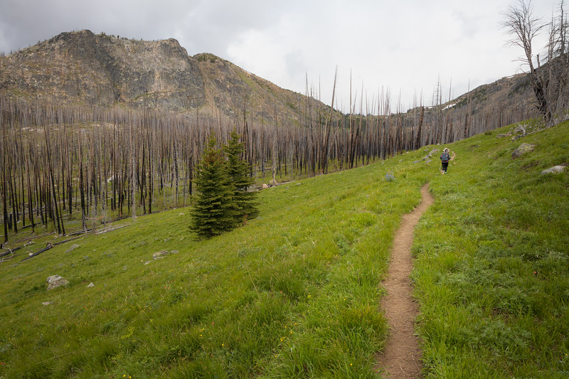 Pasayten, Horseshoe Basin - Hiker walking through meadow next to burned forest