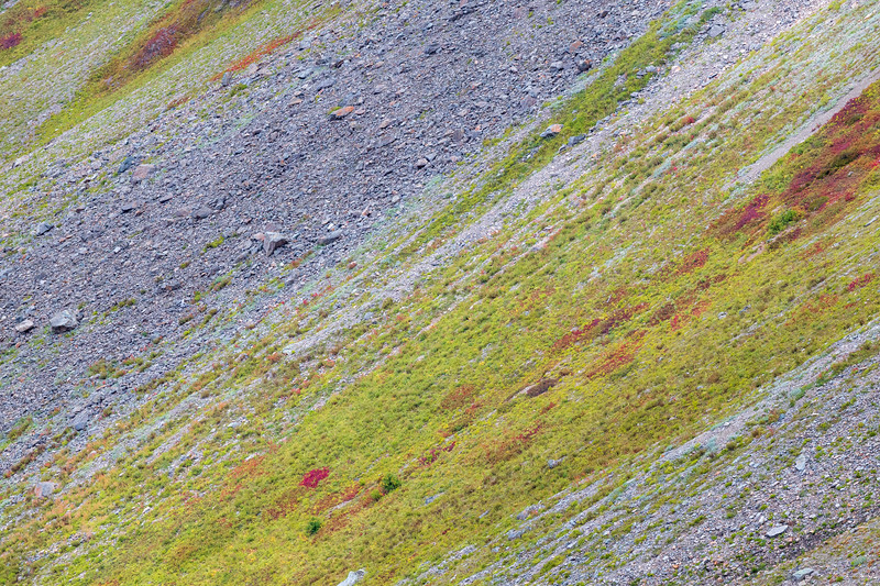 Whatcom, Winchester Mountain - Colorful hillside surrounded by rocks