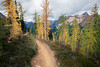 Rainy Pass, Cutthroat Pass - Open section of larch trees alongside the trail with Porcupine Peak in the distance
