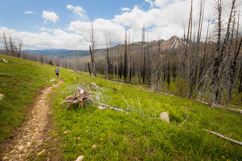 Pasayten, Horseshoe Basin - Hiker descending through area of burned forest and meadow