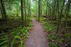 North Cascades, Newhalem - Gravel path through green forest