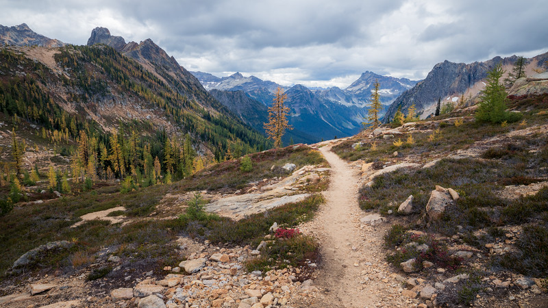 Rainy Pass, Cutthroat Pass - Trail leading to valley view with two larch trees, wide and cinematic