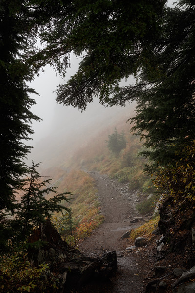 Whatcom, Artist Point - Path leading into the fog framed by trees
