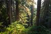North Cascades, Cascade Pass - Sun peeking through stand of trees