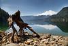 Whatcom, Baker Lake - Unusual tree stump on the shore of Baker Lake