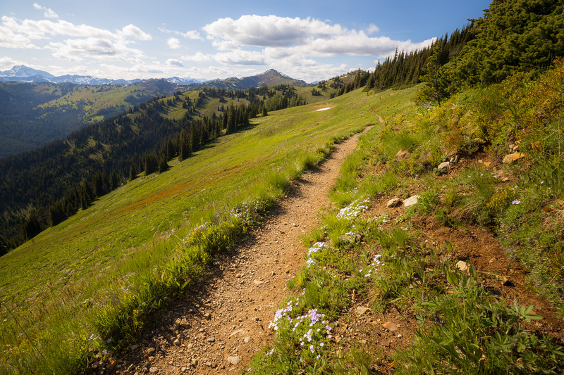 Harts Pass, Windy Pass - Pacific Crest Trail passing through a beautiful meadow