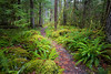 North Cascades, Newhalem - S curve in a path through a lush forest