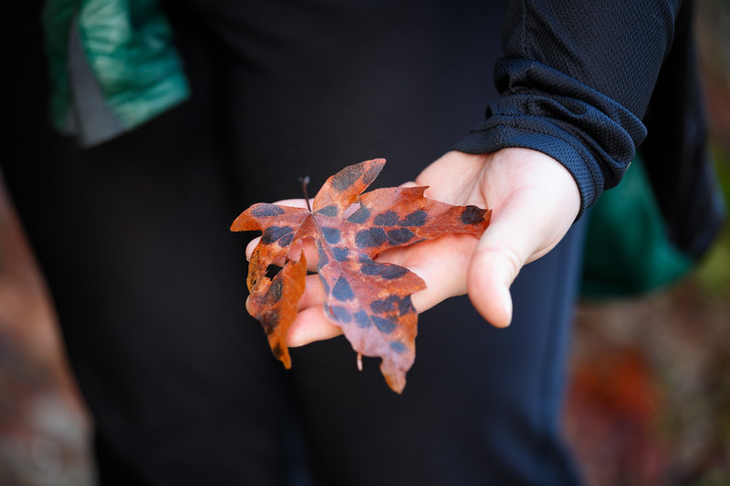 North Cascades, Ross Lake - Woman holding a red spotted leaf