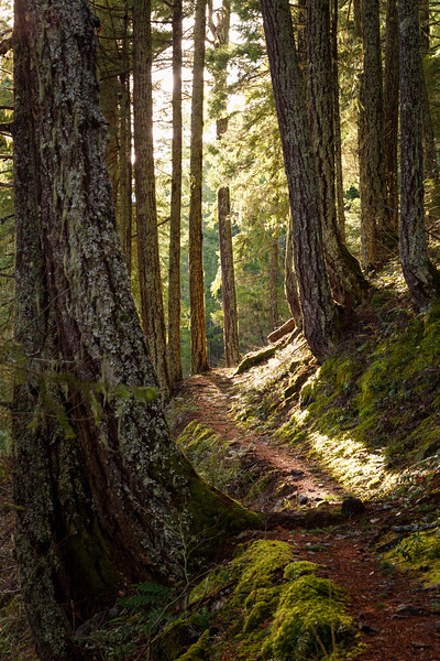 North Cascades, Ross Lake - Trail through the forest illuminated by sun