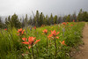 Pasayten, Horseshoe Basin - Colorful wildflowers and approaching rain storm