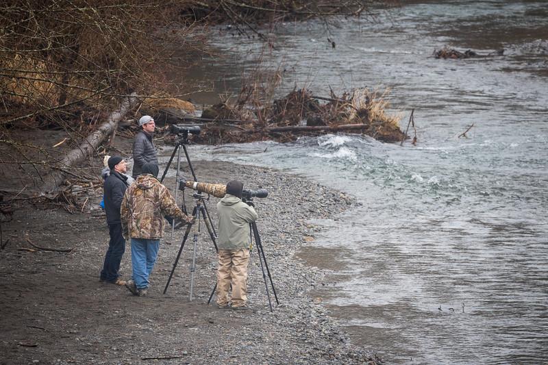 Whatcom, Mosquito Lake Bridge - Group of wildlife photographers on shores of Nooksack River