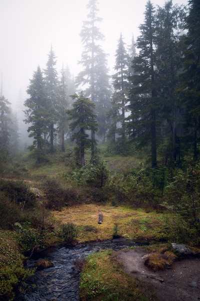 North Cascades, Thornton Lakes -  Foggy forest, meadow, and river