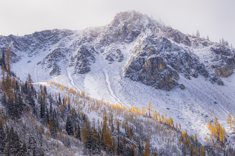 Rainy Pass. Maple Pass - Stand of larch on a ridge below a fog and snow covered mountain