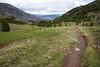 Pasayten, Horseshoe Basin - Trail near Sunny Pass looking towards burned forest