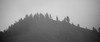 Whatcom, Winchester Mountain - Distant ridge with trees in the fog, black and white
