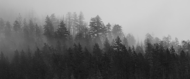 North Cascades, Newhalem - Distant trees shrouded in fog, black and white