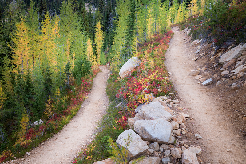 Rainy Pass, Cutthroat Pass - Switchback on trail with stand of yellow and green larch