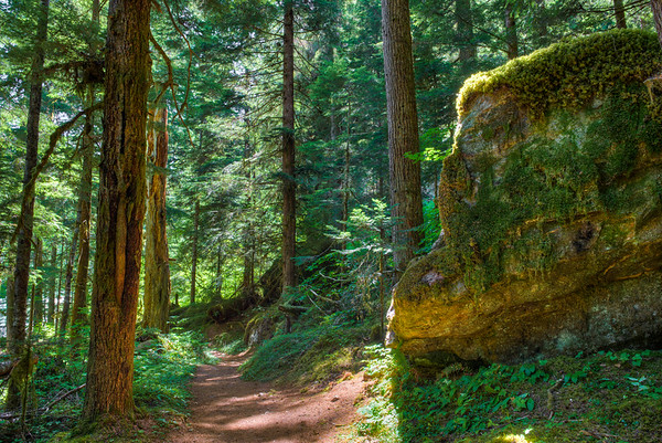 On the Thunder Creek Trail