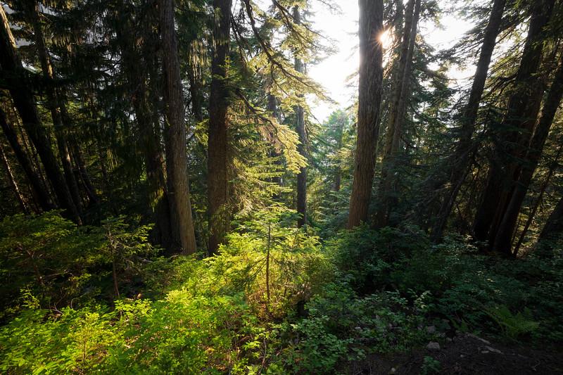 North Cascades, Cascade Pass - Sun peeking through stand of trees, wider