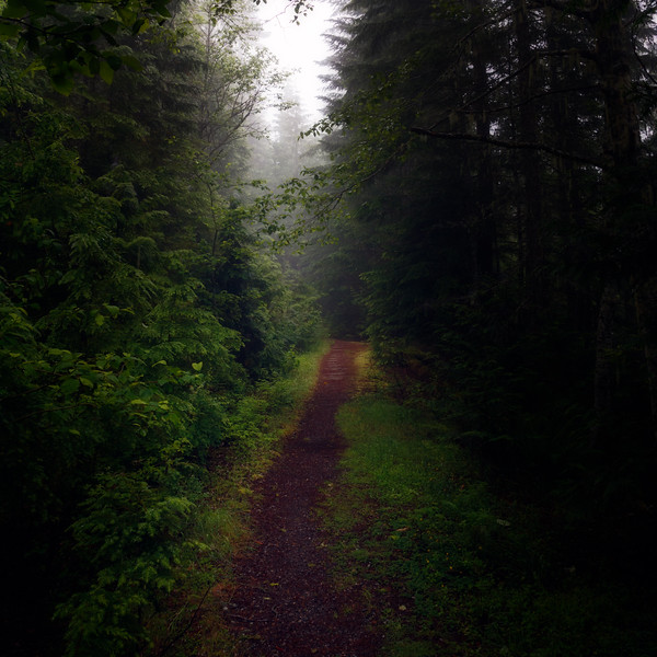 North Cascades, Thornton Lakes -  Foggy forested trail