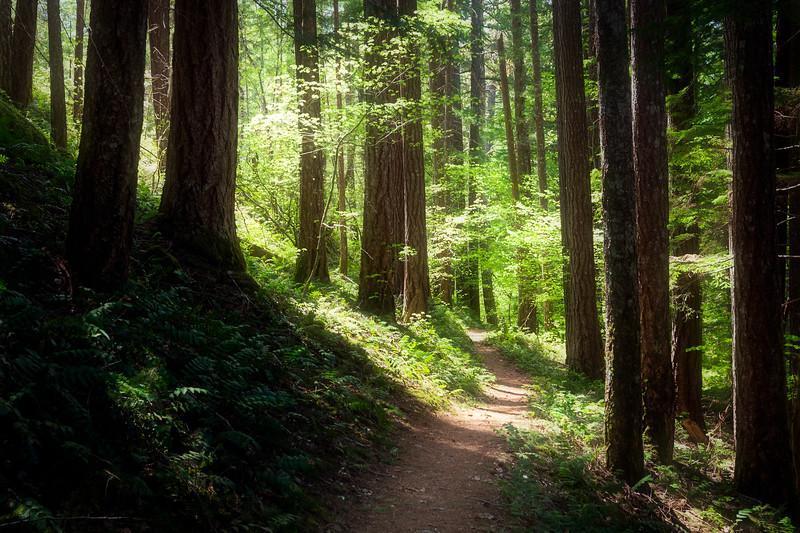North Cascades, Diablo Lake - sunlight filtering through trees on trail