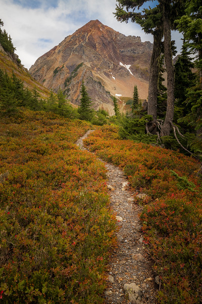 Whatcom, Winchester Mountain - Trail through red bushes with Mt. Larrabee