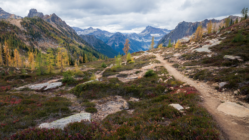 Rainy Pass, Cutthroat Pass - Trail leading to valley view with two larch trees, widest