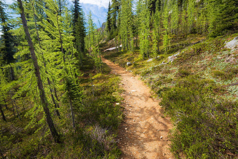 Harts Pass, Tatie Peak - Trail entering a grove of larch trees