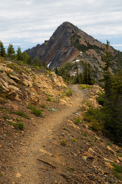 Harts Pass, Tatie Peak - Trail winding toward distant peak