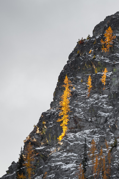 Washington Pass, Blue Lake - Larches lit by rising sun on edge of cliff
