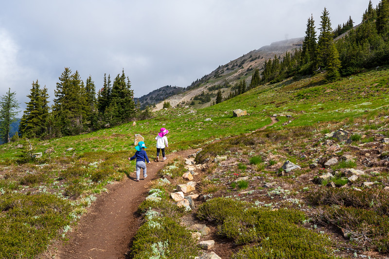 Methow, Harts Pass - Two small children on the Pacific Crest Trail walking through a sweep