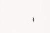 Skagit, Kukutali Preserve - Bird in motion, black and white