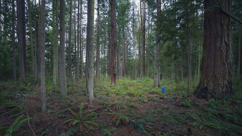 Skagit, Kukutali Preserve - Little boy entering a forest clearing