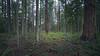 Skagit, Kukutali Preserve - Little boy entering a forest clearing