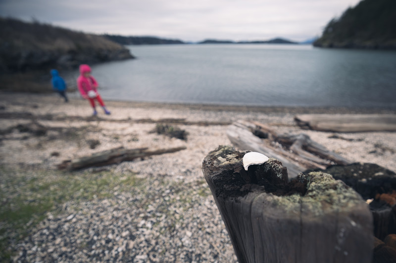 Skagit, Kukutali Preserve - Seashell on stump in focus with kids and beach out of focus