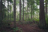 Skagit, Kukutali Preserve - Calm section of forest with cedars