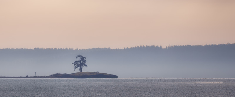 Skagit, Kukutali Preserve - Lone tree on island in middle of the sea