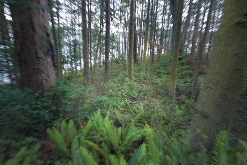 Skagit, Kukutali Preserve - Camera movement through stand of forest