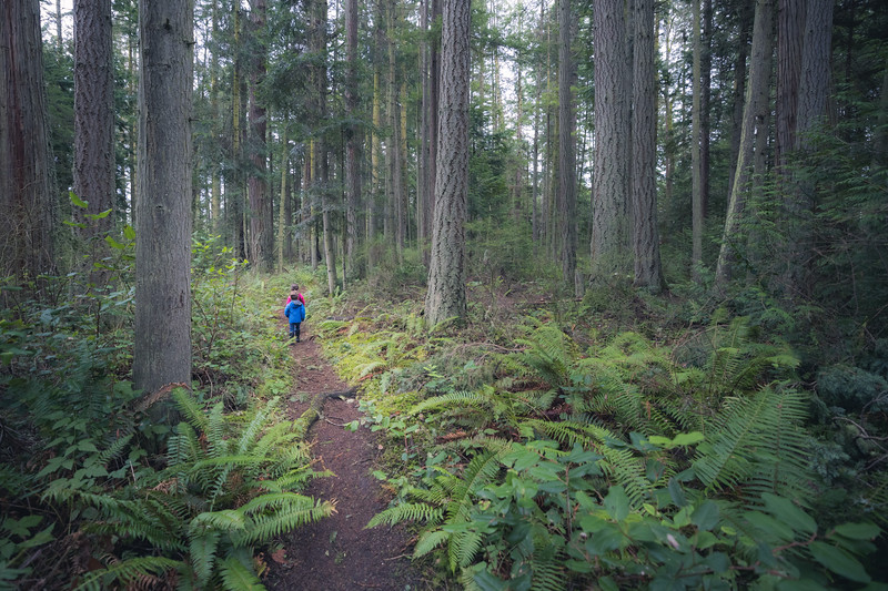 Skagit, Kukutali Preserve - Two little kids hiking on trail through tall trees