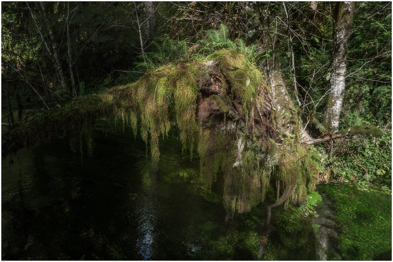 Enchanted Lake (Hoh Forest)