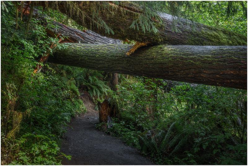 Road Under Three Trees