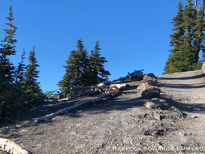 A couple of ptarmigans joined us on the trail