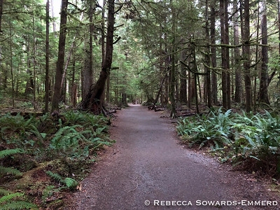 Trail to Marymere Falls