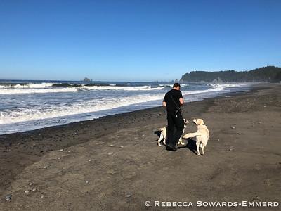 Rialto Beach is dog friendly for a stretch. Yay!