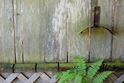 Fern and Wood Slats Lavender Farm
