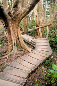 Trail at Cape Flattery